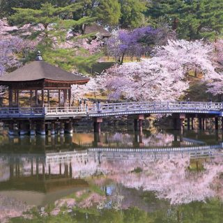 奈良の桜開花情報