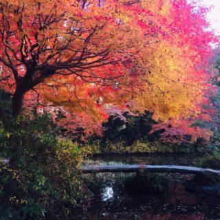 秋の紅葉シーズン♥️🎼.•*¨*•.¸¸🎶